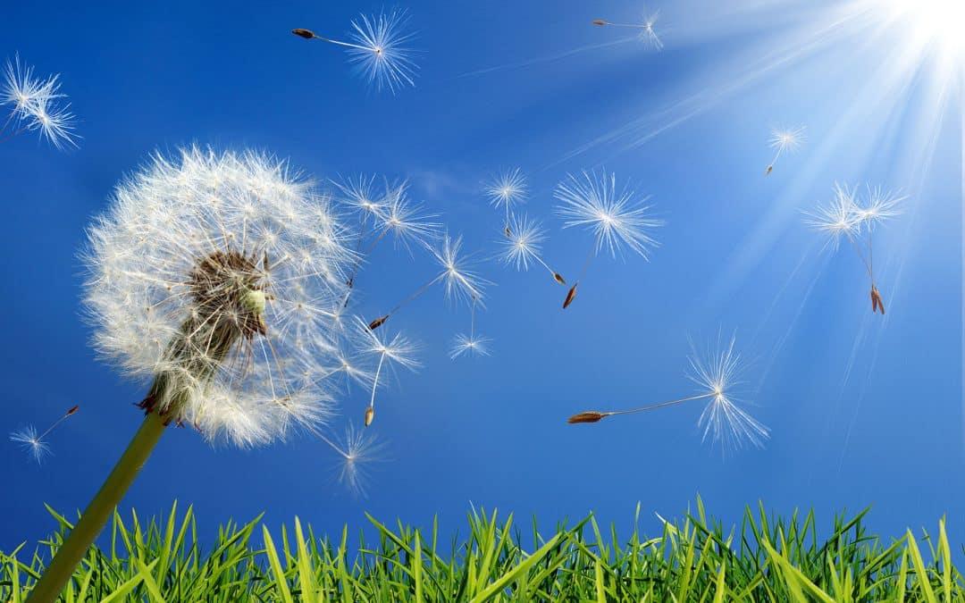 Six Ways to Fight Fall Seasonal Allergies